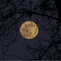 gerhana bulan (foto: unsplash)