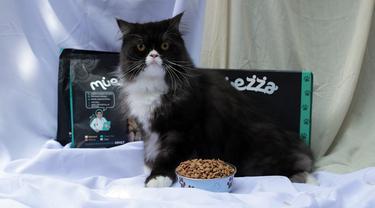 Kucing Kesayangan Jadi Picky Eater, Gimana Menghadapinya Ya?