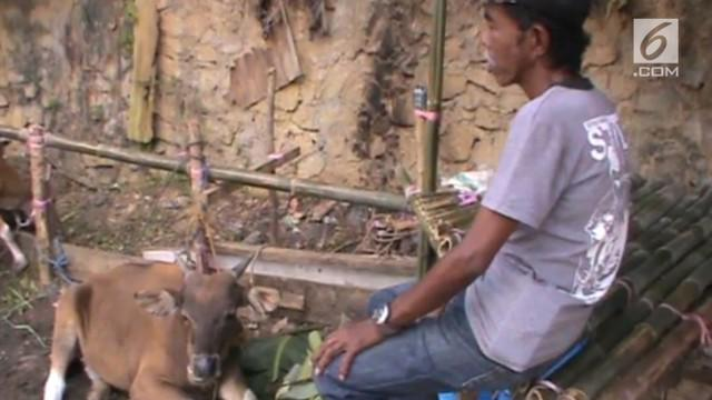 Seorang juru parkir di Kendari rela menyisihkan penghasilan lima ribu per hari demi mewujudkan niatnya untuk berkurban sapi.