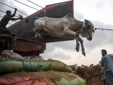 Pedagang menurunkan sapi dari truk di pasar ternak yang disiapkan untuk hewan kurban pada Hari Raya Idul Adha di Karachi, Pakistan pada Jumat (10/7/2020). Idul Adha merupakan salah satu hari raya umat Islam di dunia yang identik dengan penyembelihan hewan kurban bagi yang mampu. (Asif HASSAN/AFP)