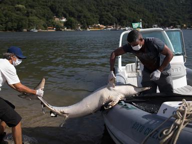 Ahli biologi, Leonardo Flach menarik bangkai lumba-lumba yang ditemukan mati mengapung di Teluk Sepetiba, 72 km dari Rio de Janeiro, Brasil, Kamis (11/1). Lebih dari 80 lumba-lumba mati dalam jangka waktu 18 hari terakhir di teluk itu. (AP/Leo Correa)
