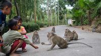 Kawanan monyet bermain dengan anak-anak di Cikakak, Wangon, Banyumas. (Foto: Liputan6.com/Muhamad Ridlo)