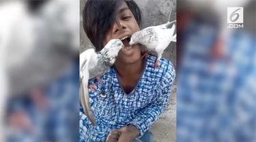 Pria asal Rajashtan, India memberikan makan dua burung merpati peliharaannya dengan cara unik. Ia membiarkan hewan peliharaannya makan gandum langsung dari mulutnya.