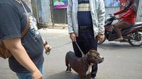 Pitbull serang satpam kompleks di Sawah Besar. (Merdeka.com)