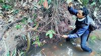 Aksi mendebarkan Amar menaklukkan king kobra di sungai. (Liputan6.com/M Syukur)