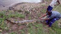 Seorang petani di Jambi mendapatkan buaya saat memancing. (Bangun Santoso/Liputan6.com)