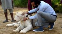 Memelihara singa di Pakistan adalah bukti seseorang kaya raya (AFP Photo)