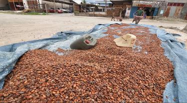 Petani Simpan Bijih Kakao