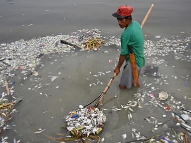 Pekerja mengumpulkan ikan mati yang hanyut ke daratan Freedom Island di sepanjang Teluk Manila, Filipina, Jumat (11/10/2019). Pejabat Departemen Pertanian mengatakan pemerintah mencurigai kematian ribuan ikan tersebut disebabkan oleh penceman air di Teluk Manila. (Ted ALJIBE/AFP)