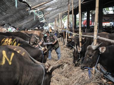 Petugas mendata sapi yang akan dijadikan hewan kurban di Rumah Pemotongan Hewan (RPH) PD Dharma Jaya, Cakung, Jakarta, Kamis (30/7/2020). Menjelang Hari Raya Idul Adha 2020, RPH PD Dharma Jaya melakukan berbagai persiapan. (merdeka.com/Iqbal S. Nugroho)