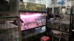 Aktivitas pedagang salah satu kios di Pusat Ikan Hias Johar Baru, Jakarta, Selasa (4/2/2020). Minimnya promosi menyebabkan pasar ikan hias yang dikelola Dinas Koperasi dan UMKM Provinsi DKI itu sepi pengunjung dan banyak pedagang merugi hingga akhirnya menutup kios. (merdeka.com/Iqbal Nugroho)
