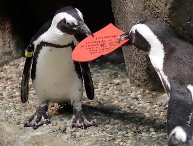 Penguin Rayakan Hari Valentine