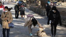 Seorang wisatawan mengelus seekor rusa di Nara, Jepang, pada 9 Desember 2020. Rusa Nara, yang hidup berdekatan dengan manusia, menjadi salah satu simbol Kota Nara. Rusa Nara dilindungi sebagai monumen alam Jepang. (Xinhua/Du Xiaoyi)