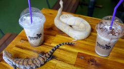 Foto yang diambil pada 18 Agustus 2018 menunjukkan dua ekor reptil berada di antara minuman di Reptile Cafe, Phnom Penh, Kamboja. Di dinding kafe reptil ini terdapat semacam akuarium yang berisi ular berbagai ukuran dan warna. (AFP/TANG CHHIN Sothy)