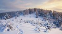 Ilustrasi hutan Siberia (iStock)
