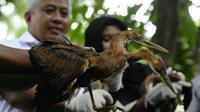 Burung cangak yang disita BBKSDA Riau dari penjual di penggir jalan. (Liputan6.com/M Syukur)