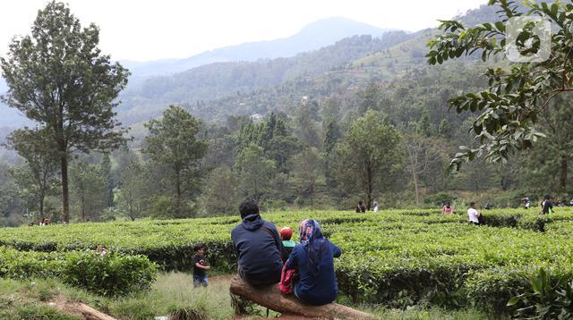 Warga beristirahat di kawasan wisata Kebun teh Puncak Kabupaten Bogor Jawa Barat, Sabtu (31/10/2020). Libur panjang peringatan Maulid Nabi Muhammad SAW dimanfaatkan warga untuk mengunjungi lokasi-lokasi wiisata. (Liputan6.com/Helmi Fithriansyah)
