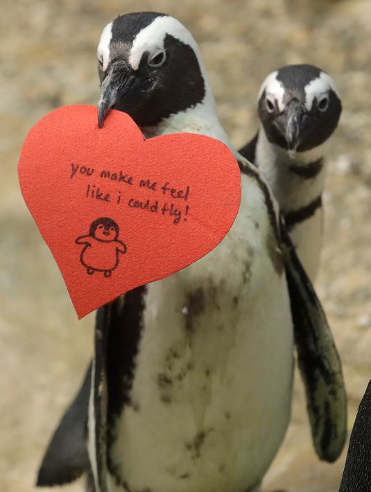 Foto Tingkah Lucu Penguin Rayakan Hari Valentine Global Liputan6 Com