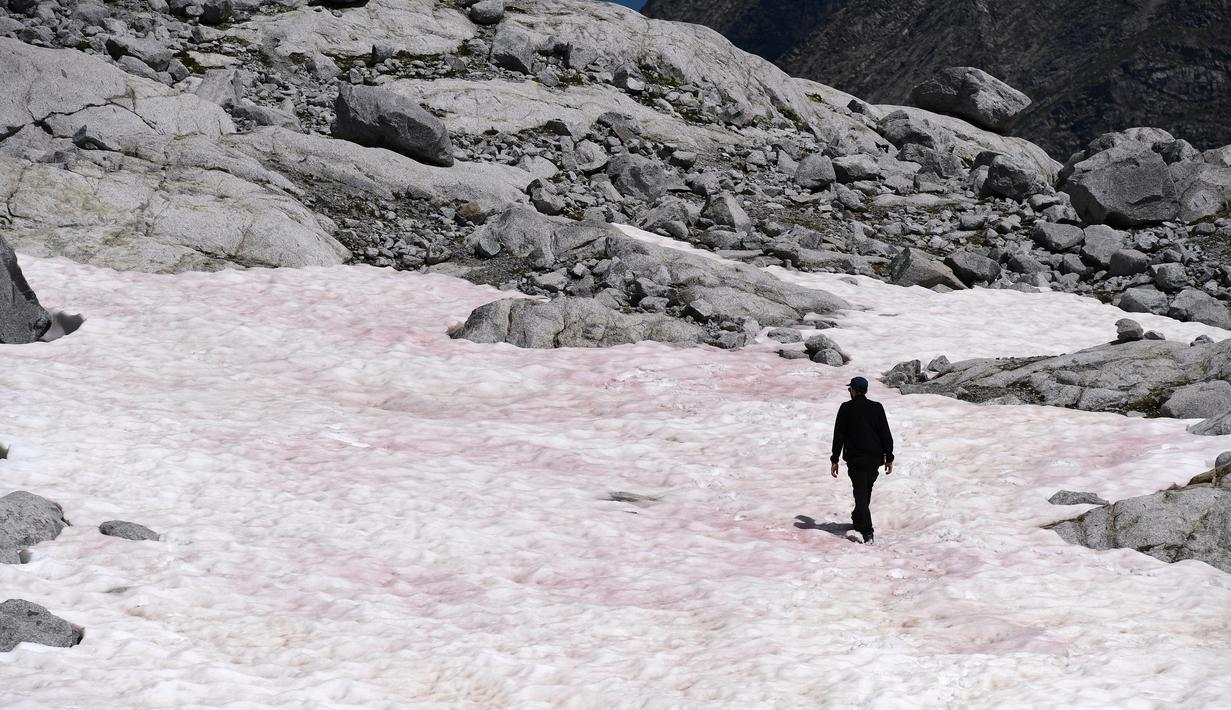 Gambar pada 4 Juli 2020 di gletser Presena dekat Pellizzano, Italia menunjukkan seorang pria berjalan di atas salju berwarna pink atau merah muda. Perubahan warna ini diketahui karena adanya tumbuhan alga di kawasan itu yang membuat warna salju menjadi lebih gelap. (Photo by Miguel MEDINA / AFP)