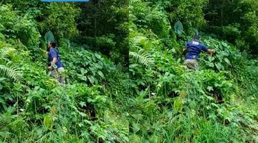 Bapak BNN cari tanaman hias di hutan liar