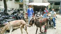 Pemilik Protes ke Diler dengan Membawa 2 Keledai (Rushlane)