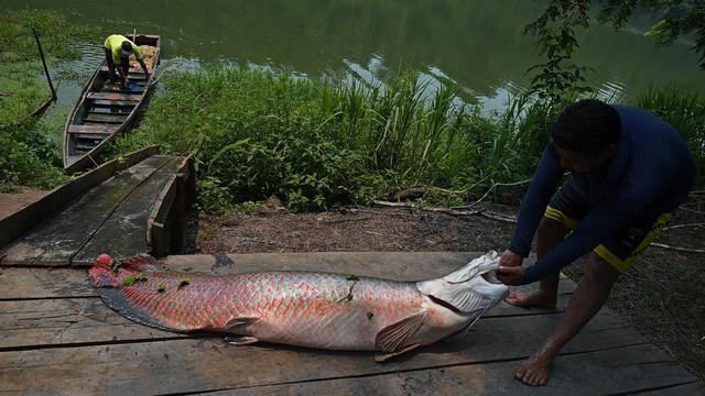 Download 78+ Contoh Gambar Ikan Besar HD Terbaru