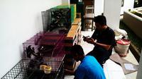 BKSDA Kalbar menyita ratusan burung kacer yang hendak diselundupkan ke Pulau Jawa. (Foto: BKSDA Kalbar/Raden AMP)