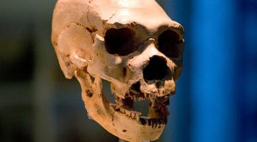 Tengkorak Homo neanderthalensis