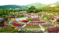 Di Seoul, Korea Selatan, musim panas ini dirayakan dengan mengadakan The Rose Garden Walking Festival.