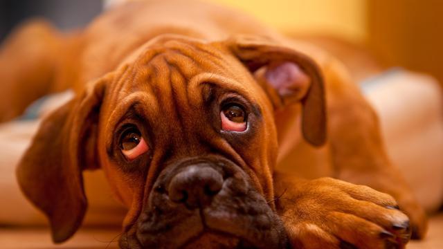 Anjing Ini Ilustrasikan Kesedihan Paling Duka dalam Hidup