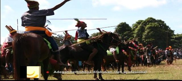Bergiliran memasuki arena, saling melempar lembing sepanjang dua meter. Inilah Pasola, tradisi pertarungan para ksatria berkuda di wilayah Sumba Barat dan Sumba Barat Daya.