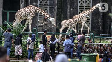 FOTO: Libur Lebaran di Taman Margasatwa Ragunan