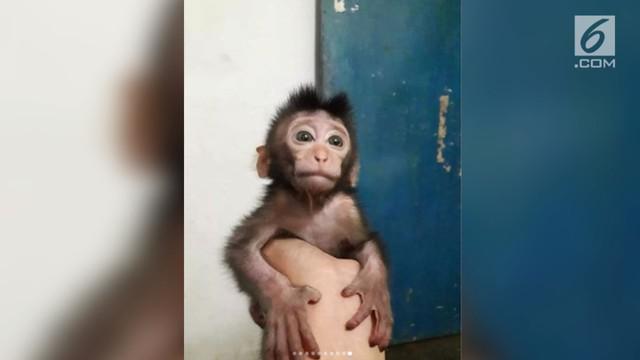 Warganet dihebohkan dengan foto saat seorang pemburu pamer monyet yang baru dibunuhnya. Pemburu tega membunuh dua induk monyet di depan anaknya sendiri.
