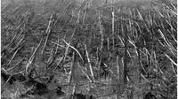 Dampak insiden Tunguska (NewScientist)