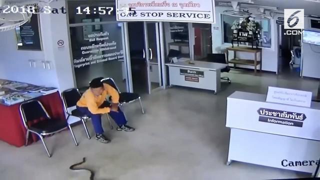 Secara tiba-tiba, ular langsung menyerang seorang pengunjung yang sedang menunggu di kantor polisi.