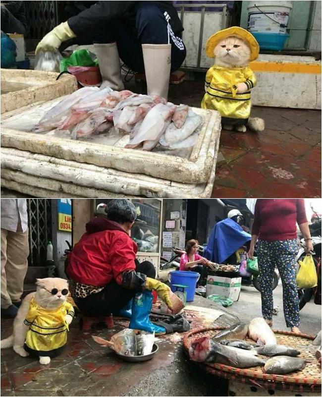 Dog sedang menjalankan tugas/copyright Le Quoc Phong
