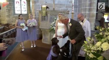 Sebuah kejutan dipersiapkan pria ini untuk sang mempelai wanita. Ia menggunakan dua anjing dalam kejutannya tersebut untuk menjadi pembawa cincin pernikahan.