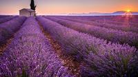 Valensole, Perancis. (holidaypirates.com)