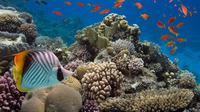 Ilustrasi Ikan-ikan dan Terumbu Karang (Pixabay)