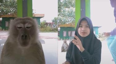 Viral Monyet Mau Ikutan Main TikTok, Respon Warganet Bikin Ngakak