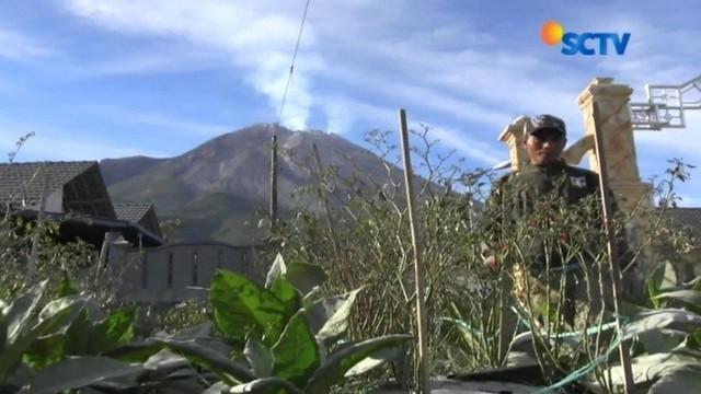 Petani di Boyolali, Jawa Tengah, terpaksa merugi lantaran ratusan hektar lahan pertaniannya rusak tertutup abu vulkanik Gunung Merapi.