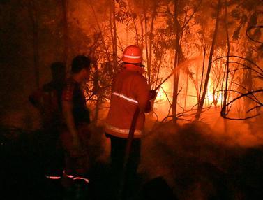 Pemadam Kebakaran Berjibaku Padamkan Karhutla Pekanbaru