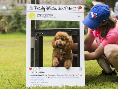 Seorang wanita menempatkan anjing peliharaannya dalam bingkai foto pada acara Party 4 Paws 2020 di Toronto, Kanada, 30 Agustus 2020. Sebuah acara yang cocok dikunjungi keluarga, pameran hewan peliharaan ini menarik ratusan pengunjung bersama anjing peliharaan mereka. (Xinhua/Zou Zheng)