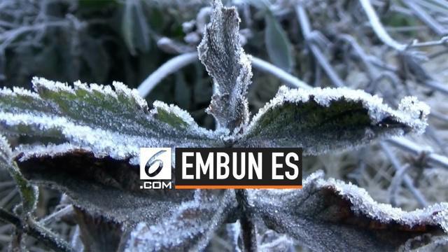 Jumlah wisatawan Probolinggo, Jawa Timur naik seiring munculnya embun es akibat turunnya suhu hingga -4 derajat.