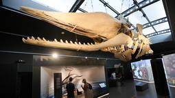 Orang-orang mengamati koleksi benda pameran di Museum Institut Ilmu Pengetahuan Alam Kerajaan Belgia di Brussel, Belgia (15/9/2020). Museum ini membuka rute satu arah baru untuk menawarkan kepada publik cara yang aman untuk berkunjung di tengah pandemi COVID-19. (Xinhua/Zheng Huansong)