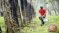 Produksi Indonesia yang tahun ini sekitar 3,1 juta ton juga akan mempengaruhi stok karet alam global.