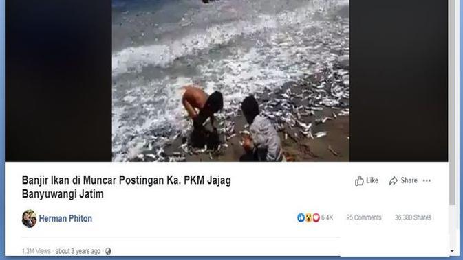 [Cek Fakta] Banjir Ikan Terdampar di Banyuwangi, Fakta atau Hoaks?