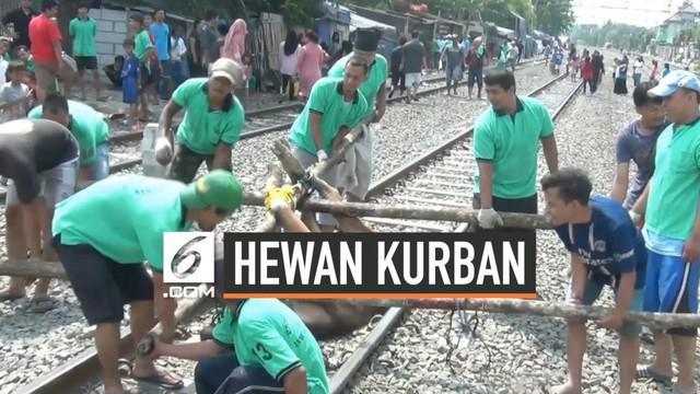 Sudah bertahun-tahun warga Kampung Sunter Tanjung Priok Jakarta Utara memotong hewan kurban di piggir rel kereta api. Keterbatasan lahan menjadi penyebabnya. Warga telah memimnta izin PT KAI untuk melakukan kegiatan ini.