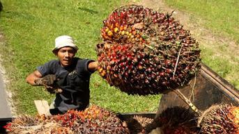 Menuju Indonesia Emas 2045, Kementan Siapkan Daya Saing SDM Perkebunan