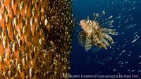 Berikut adalah foto habitat-habitat bawah laut yang memenangkan kontes foto Ocean Art Competition 2014.